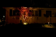 Landscape-Lighting-on-Japanese-Maple